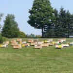 whalen apiaries
